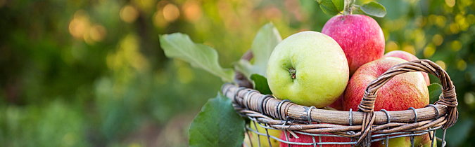 wellness65-article_apples-in-a-basket_171025